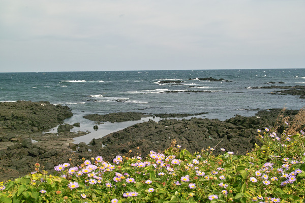 Jeju island coast rock in KORE