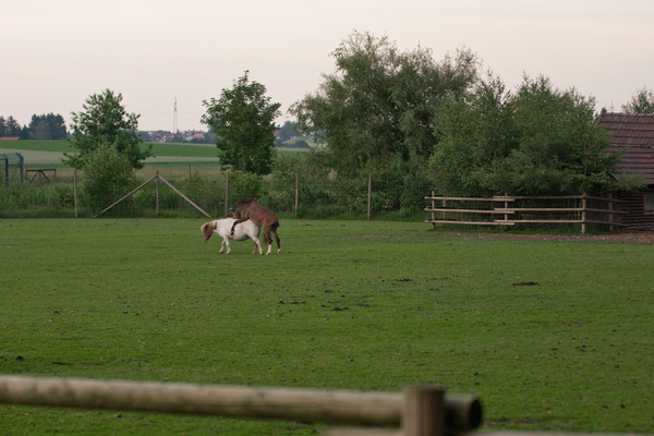 Pony Love: Pony Love on Meadow