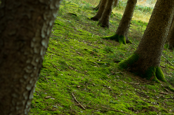 Vivid green Moss between old T