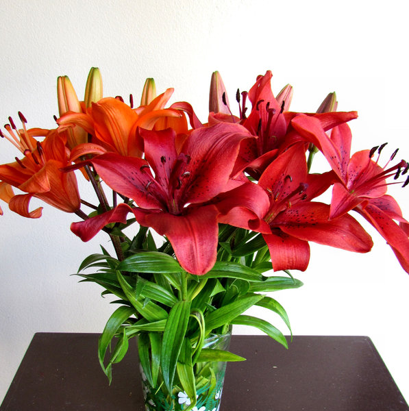 lily display1: colourful bunch of oriental lilies opening up