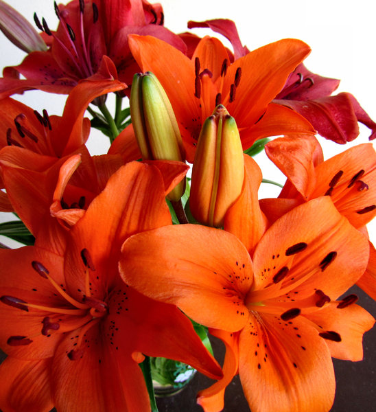 lily display3: colourful bunch of oriental lilies opening up