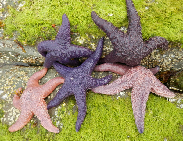 five starfish: no description