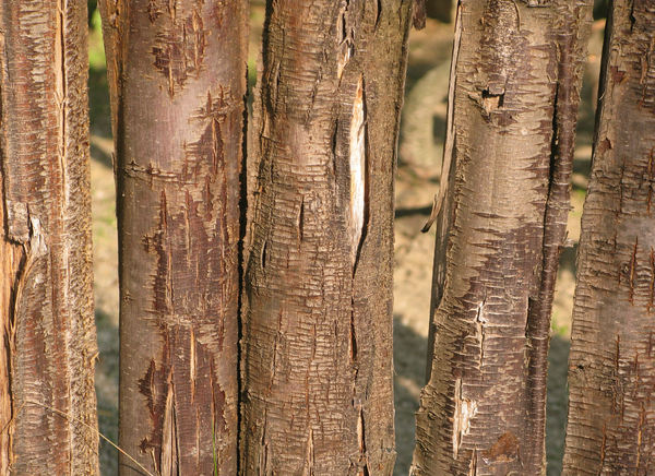 wooden fence: none