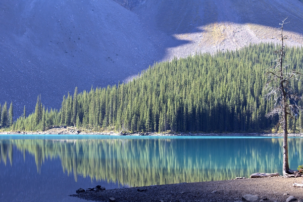 Reflected forest: Forest reflected in Lake Moraine, an intensely blue lake of glacial meltwater in western Canada.