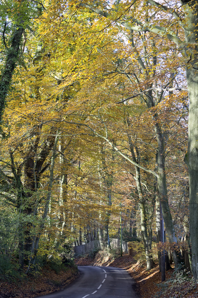 Autumn lane: A country lane in autumn in West Sussex, England.