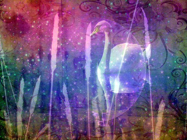 Fantasy Swan 5: A beautiful dreamy collage fantasy image of a swan with a full moon, water reeds and a fantasy star effect..