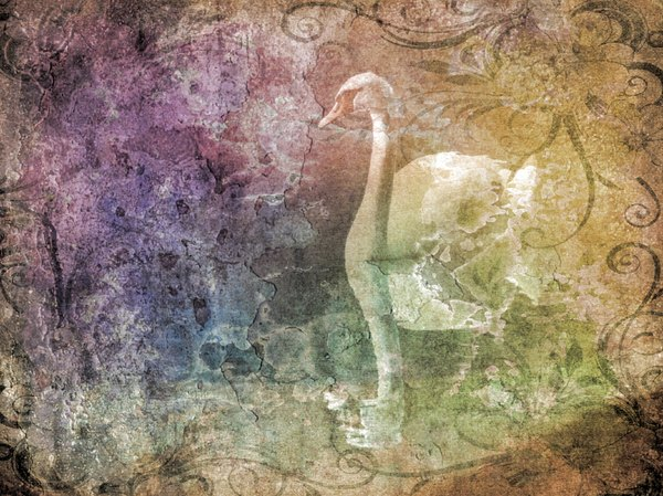 Fantasy Swan 1: A beautiful collage fantasy image of a swan with a layered grunge effect.. You may prefer:  http://www.rgbstock.com/photo/nW0g7ti/Fantasy+Swan+3