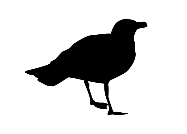 Seagull: A silhouette of an animal.
