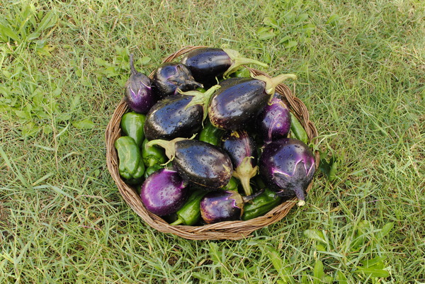 eggplants and peppers 2