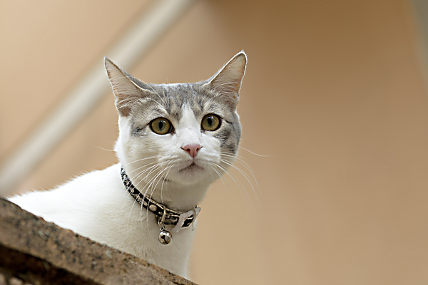 Cute cat with yellows eyes 3