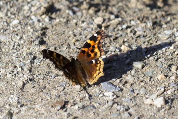 Butterfly basking