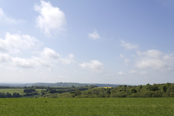 Spring landscape: Landscape of the South Downs, West Sussex, England, in spring.