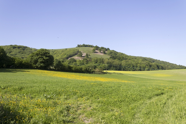 Meadow landscape: Meadows by the South Downs, West Sussex, England, in spring.