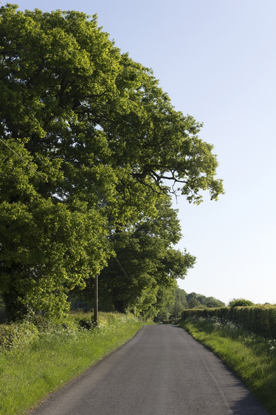 Rural road: A rural road in West Sussex, England, in spring.