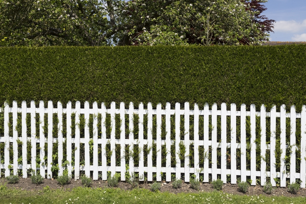 Picket fence and hedge