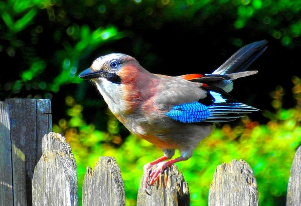 From My Backyard 1: I made this shot with my Samsung cam. through the window of the dining room, actually I made a lot of good shots, which you are going to see in my coming shares.