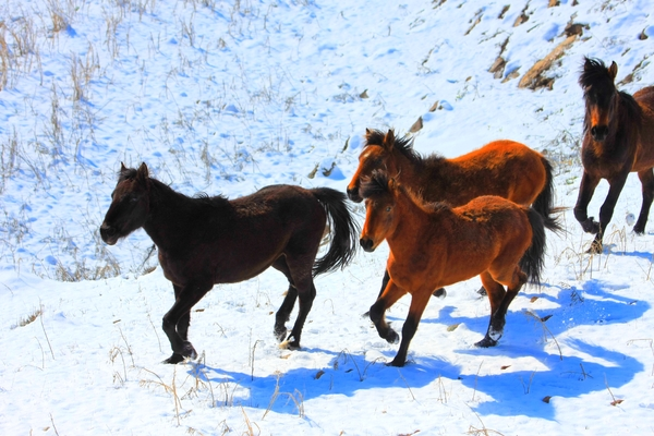 Horses: Some pony in snow.