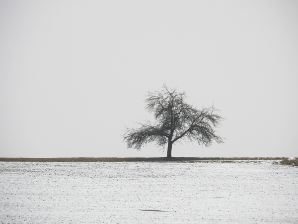solitary winter tree: solitary winter tree
