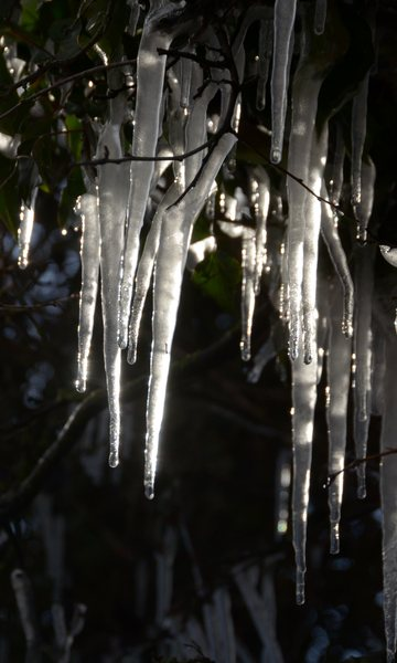Icicles by moonlight