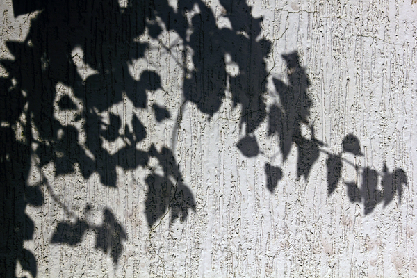 Vine Shadow