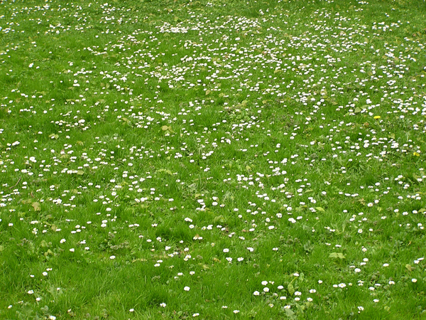 Lawn with folwers