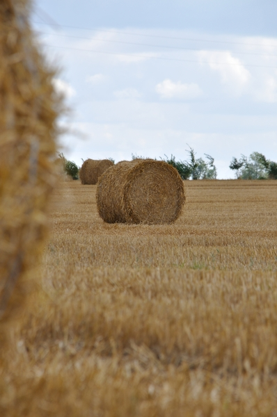 Hay bales  15: Hay bales in the field. Normandy France