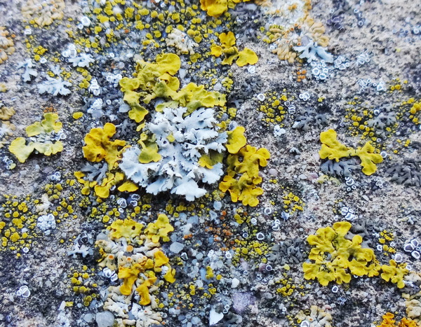 Lichen on stone wall: Lichen on stone wall