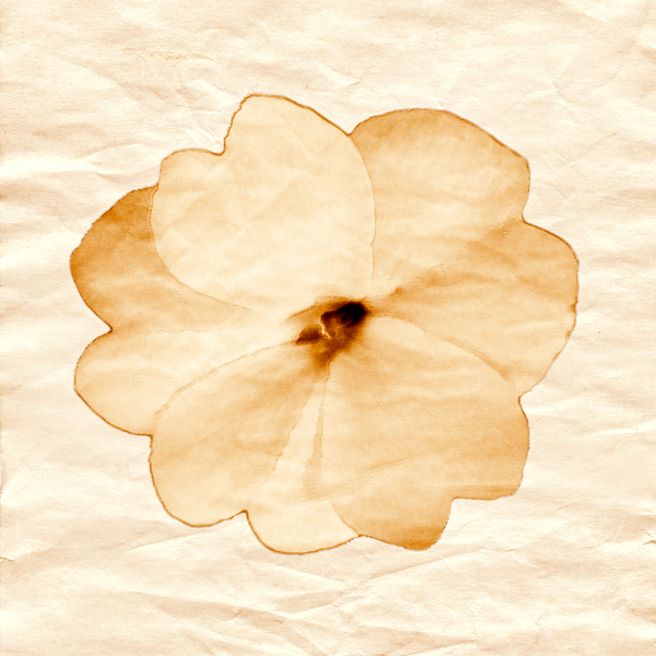 paper flower: paper flower - graphic design