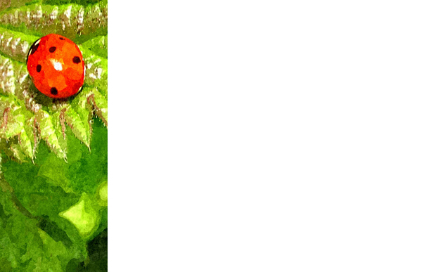 Nature Banner 4