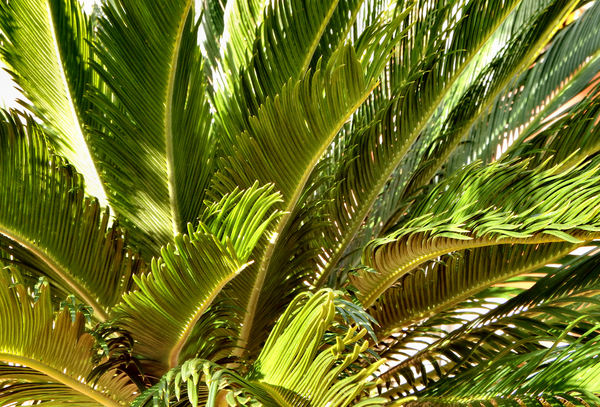 palm background1