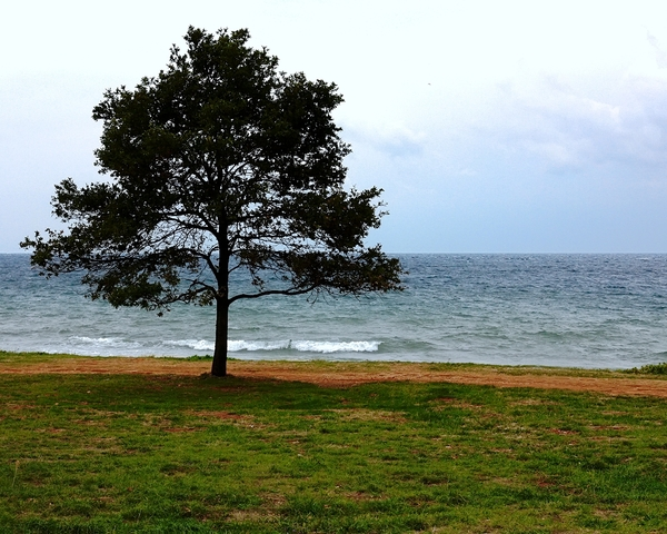Pinetree on the beach 3