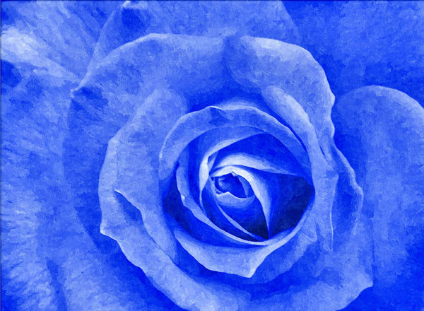 painted blue rose1: painted blue rose