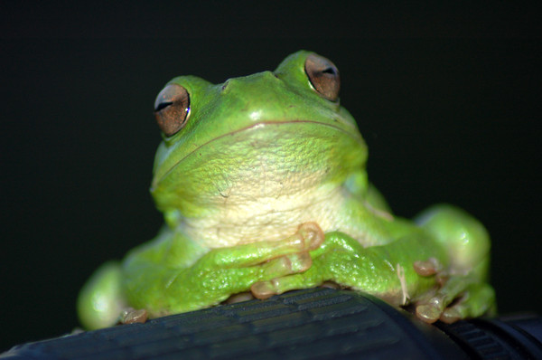 thinking: intelectual frog