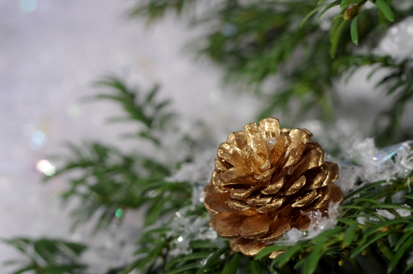 Golden cone on tree