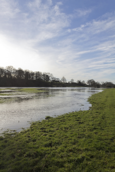 Winter flood meadows