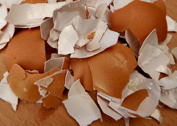 broken egg shells12