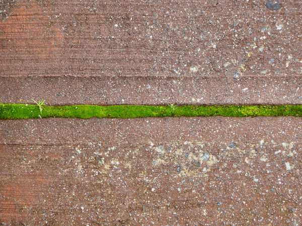 the green line1: dividing line of green moss growth in concrete driveway crack