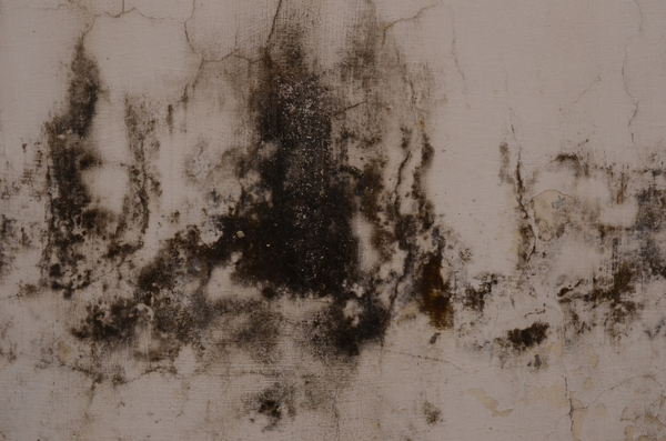Decaying wall 1