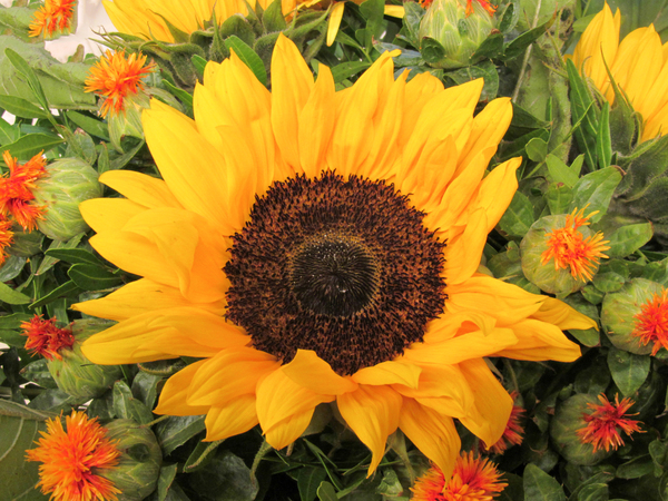 sunflower bouquet 4