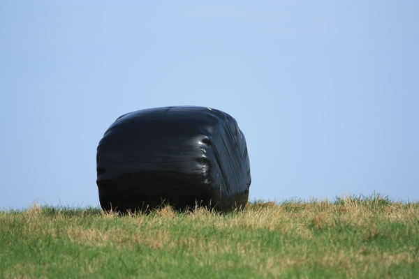 Hay Bales: Black plastic covered hay bales