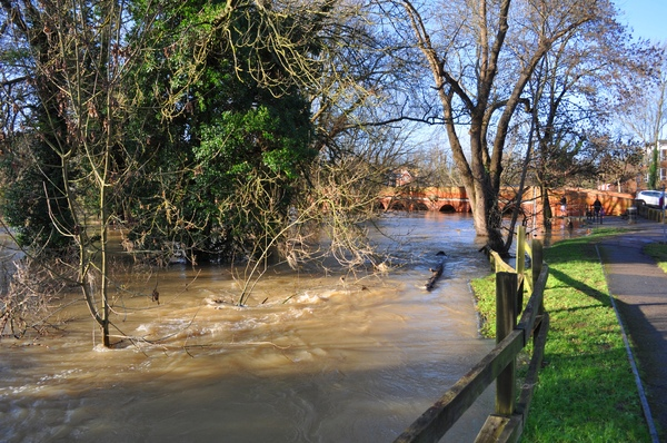 Flooded River Mole