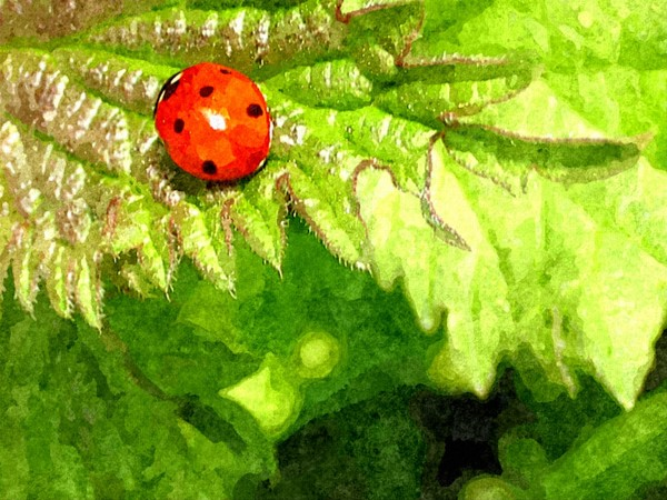 Ladybird on Fern