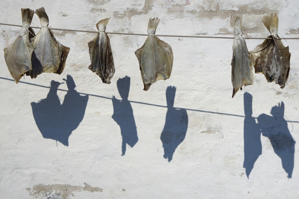 Stockfish: Stockfish in front of whitewashed wall