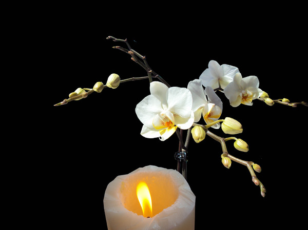 Orchids with candle on black: White orchids with candle on black background