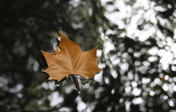 Floating Autumn Leaf: A leaf floating on the surface of a lake in Portugal.