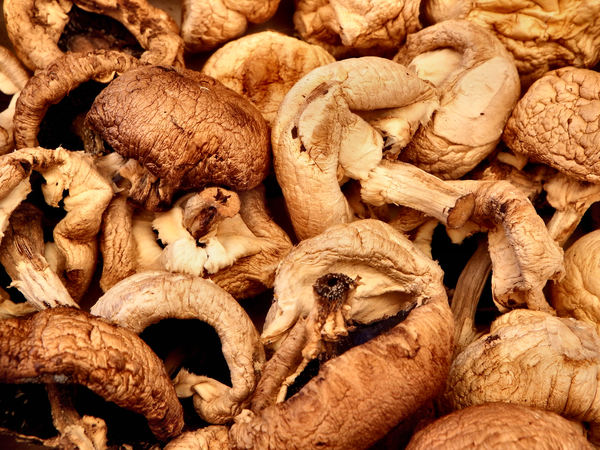 sundried mushrooms4