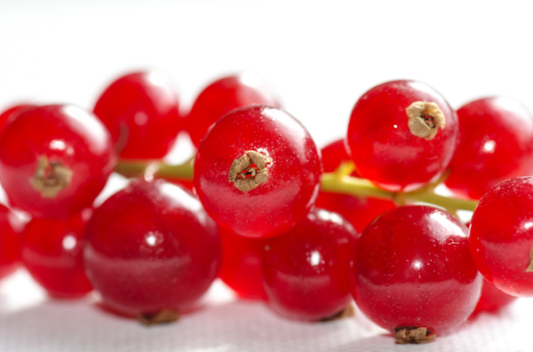 red currants: red currants macro
