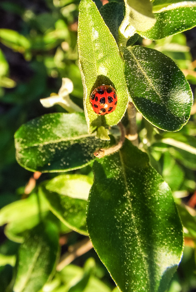 LIttle lady bug