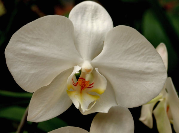 intricate orchids14