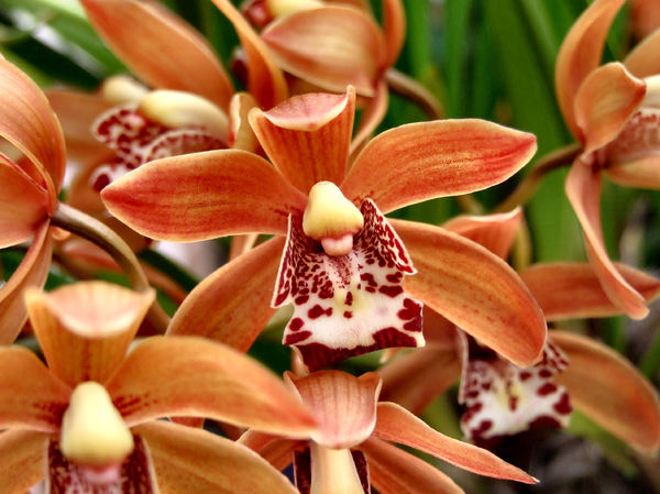 intricate orchids11